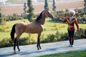 Visit The Horse Farm In Geokdepe