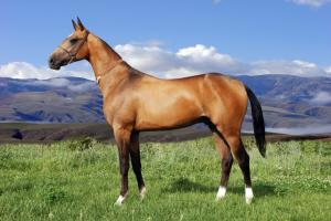 Akhalteke Horse Riding Tour Packages
